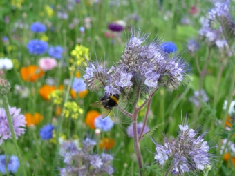 biodiversiteit-in-de-Doorntuin